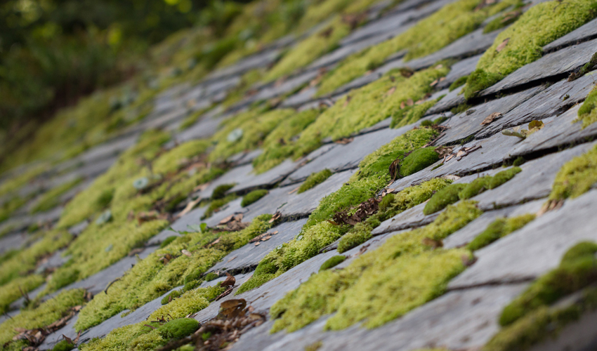 6 Reasons Why You Should Remove Moss from Your Roof