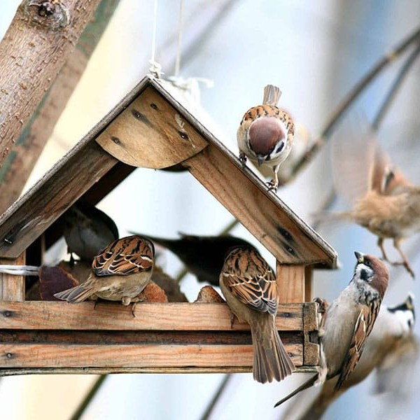 We're all familiar with the sound of birds in the morning. But sometimes, you'll notice that sound getting a bit louder than usual. When it's paired with a gentle pitter patter from above, it could mean that birds are nesting on your roof.